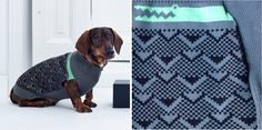 Cool dog sweaters and coats featuring colorful designs and modern patterns by Madrid-based company Pepito&Co.