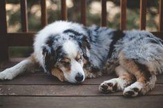 Imagem de animal, dog, and nature