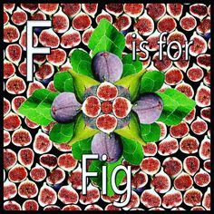 F is for Fig. Figgy Flower Power. Fruit and Vegetable. Print series that I am am making from my food photography library. Figs are also the topic for my Smy Goodness Podcast episode.  #instagood #instafood #atoz #fruitandveg #fruit #veg #vegan #foodporn #abc #print #pattern #photoshop #food #foodart #fig #flower #healthy #healthyeating #design #fooddesign #vegetarian #smygoodness #workshops #foodie  #learning #series #resources #foodphotography #foodgasm #foodstagram