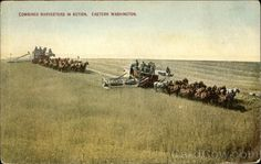 Combined Harvesters in Action, Eastern Washington Farming