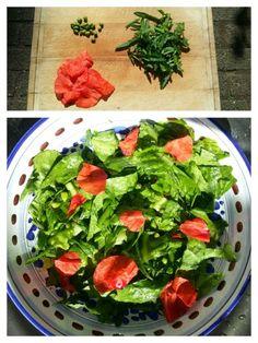 SALADE MET KLAPROOS Let op! Gebruik alleen de grote klaproos en de bleke klaproos! Ingrediënten: - jong blad van de klaproos - jonge, groene zaaddoosjes (deze smaken wat nootachtig) - rode kroonblaadjes van klaprozen - gewone sla - dressing b.v. met citroen.