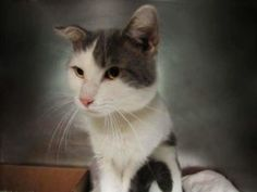 *** GONE 09/13/16 *** SCARED GUY ABANDONED AND HIDING IN GARBAGE....MISO is a…