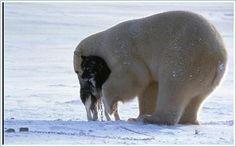 Polar bear appears to be keeping a dog warm.
