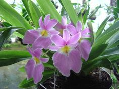 13022_g.jpg :: Flores Colombianas