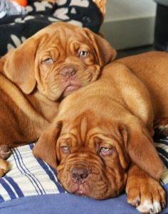Neopren Schlüsselanhänger Schlüsselband Englische Bulldogge Hundeführer Hund Hun