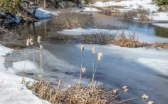 """""""Last Days of Winter"""" Captured at a sunny April day in Laurentides, Quebeck, Canada."""
