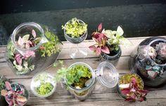 #DIY #Terrarium // We made a terrarium by schorlemädchen, via Flickr