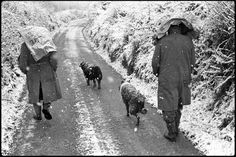Archie Parkhouse and Ivor Brock walking home by James Ravilious © Beaford Arts, 1975 A Level Photography, Landscape Photography, North Devon, English Countryside, Photographs, Photos, Archie, Agriculture, The Past