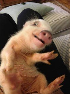 Piggy gone CRAZZZYYYY!!! ;)