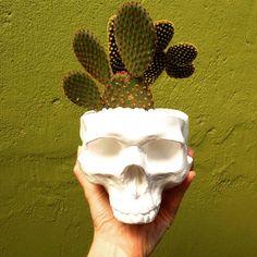 A gente tem percebido que nossos clientes imaginam nossas caveiras menores do que são!  Pois bem elas são grandes!  As medidas desse modelo da foto são: 17x13x11cm sem a planta.  [Modelo vaso/cinzeiro com planta] . #iscool #skull #caveira #caveiras #coisasdecaveira #handmade #caveirismo #instaskull #curitibacool #curitiba #cwb  #curitibahandmade #comprasonline #decoração #decor #curitibadecor #arte #art #gesso #cranio #calavera #suculenta #succulent #cactus #succulovers #succulentlove…