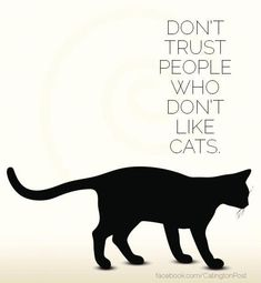 Cats can see the soul.Dont trust people who hate cats. I Love Cats, Cute Cats, Funny Cats, Cats Humor, Funny Horses, Adorable Kittens, Funny Animal, Cat Quotes, Animal Quotes