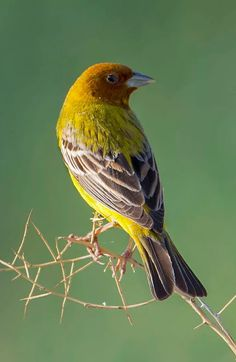 Pretty Birds, Beautiful Birds, Animals Beautiful, Different Birds, Kinds Of Birds, Birds In The Sky, Small Birds, Bird Pictures, Nature Pictures