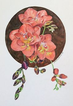 New Original Pencil Colours Painting Art #Flower Flora #Red #Freesia by Sue Flask   eBay