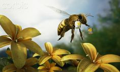 #Fotochannels #bee #flowers #honey http://fotochannels.com/zoom/42-44406355/