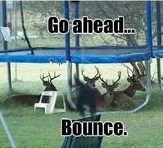 Hahaha. i think it is cute there's a bunch of deer under a trampoline!