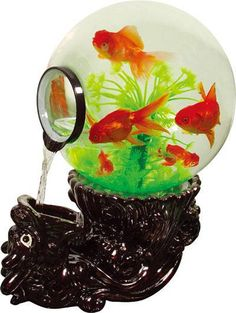 Quelques aquariums insolite et bizarre 4 photos for Aquarium insolite