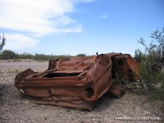 Patagonian desert flower – 1976 Ford Falcon – Junk car