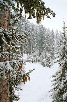 Winter wonderland ... More