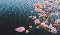 Por onde for, seja sempre flor.  Mas não deixe que lhe arranquem os espinhos. Eles serão sua defesa necessária para continuar seguindo. ❀