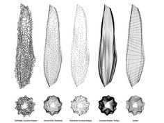 voronoi morphologies :: matsys