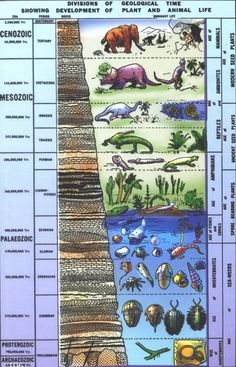 Geologic Time Scale The Precambrian was the first period of time. Geologic history is ongoing- it has not ended! How to read the Geologic time scale- Era's (The longest division) are marked by striking and world… Earth And Space Science, Earth From Space, Science And Nature, Earth Science Lessons, Education Middle School, Middle School Teachers, High School, History Of Earth, World History