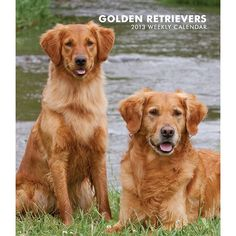 Golden Retrievers Engagement Calendar: A strong, intelligent dog, the Golden Retriever is a sweet, loving, and loyal friend. This dog loves to play and is an especially enthusiastic swimmer. http://www.calendars.com/Golden-Retrievers/Golden-Retrievers-2013-Hardcover-Engagement-Calendar/prod201300004492/?categoryId=cat10081=cat10081#