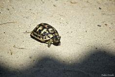 Tartaruga in spiaggia