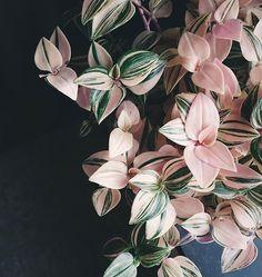 8 Portentous Useful Ideas: Artificial Plants Indoor Home artificial flowers pink.Artificial Flowers Pink artificial plants indoor home. Potted Plants, Garden Plants, Indoor Plants, Foliage Plants, Flora Garden, Indoor Flowers, Pink Garden, Garden Care, Plantas Indoor