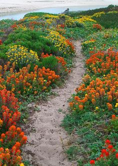 Wildflower trail