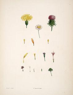 La botanique de J.J. Rousseau: 1805 By Rousseau, Jean-Jacques, 1712-1778 illustrations by Redouté, Pierre Joseph Missouri Botanical Gardens, Rare Book Collection