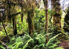 Mt Taranaki's Goblin Forests