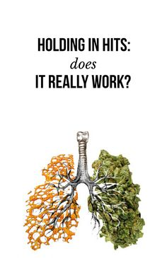 Holding in hits: Does it really work? | massroots.com Marijuana, Cannabis, Weed