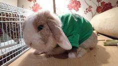 Loving his bunny jumper