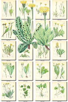 LEAVES GRASS-61 Collection of 259 vintage images vegetable