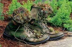 Jim Long of Long creek Farm in Arkansas created a simple and beautiful combination by planting some Hens and Chicks, Sempervivium, in a pair of old boots Succulent Gardening, Succulents Garden, Planting Flowers, Container Gardening, Old Boots, Hen Chicken, Shoe Image, Hens And Chicks, Unique Gardens