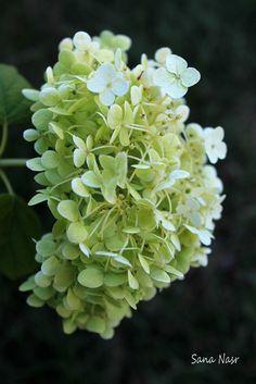 photos de fleur Fruit, Photos, Flowers, Pictures, Photographs, Cake Smash Pictures