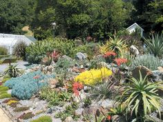 southafricangardens view in the restored 1965 succulent garden