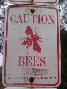 Caution BEES