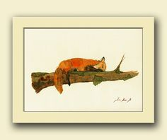 Fox animal  red fox sleeping Forest foxes wildlife by JuanBosco