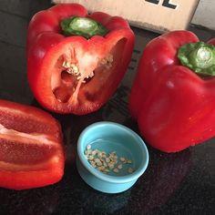 Para sembrar en el huerto  Red Pepper bell!!! by mayaa_lara