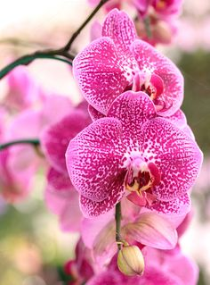 phalaenopsis orchid flower by aopsan on @creativemarket