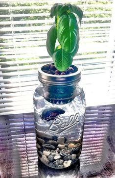 How To Build A Glass Jar Aquaponics Herb Garden - NoSoilSolutions Learn how to build your own glass jar aquaponics herb garden. Grow your favorite herbs using a betta fish and glass jar to create a mini aquaponics system.