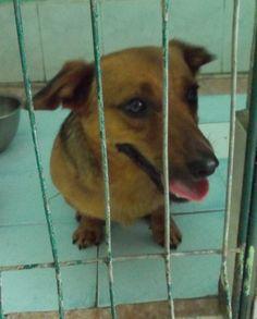 Merlin powolutku i nieśmiało wystawia swoją kandydaturę do adopcji :) www.uciechow.com   #psy #adopcje #schronisko #polska