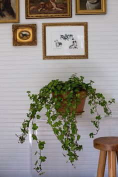 Best Houseplants: 9 Indoor Plants for Low Light - Gardenista English Ivy houseplant by Mimi Giboin: Ivy Plant Indoor, Hanging Plants Outdoor, Indoor Plants Low Light, Best Indoor Plants, Indoor Garden, Balcony Garden, Ivy Houseplant, Ivy Plants, Houseplants
