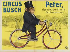 Peter The Chimpanzee Riding A Bike Poster