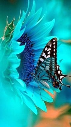 Butterfly and flowers - nature is so inspiring for art art inspiration from n. Yarn Color Combinations, Colour Schemes, Color Palettes, Butterfly Wallpaper, Butterfly Images, Blue Butterfly, Yarn Colors, Beautiful Butterflies, Belle Photo