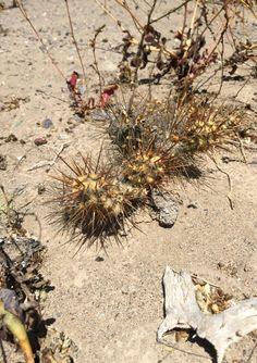 Cactus. Earth. Dirt.