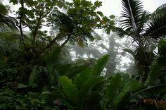 Bosque Tropical Humedo, Barra del Colorado, Costa Rica