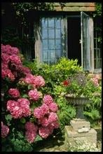 Hydrangea and leaded windows English Country Style, English Country Gardens, Love Garden, Dream Garden, Hortensia Hydrangea, Hydrangeas, Pink Hydrangea, Pink Flowers, Beautiful Gardens