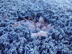 #madrid #ardillafisgona #landscape #sky #travel #christmas #christmastree #snow